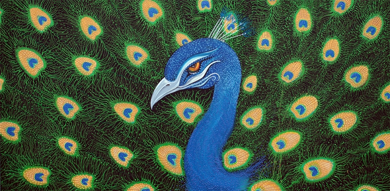 Peacock by Laura Barbosa - display